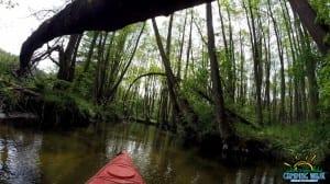 spływ kajakowy rzeka Drawa